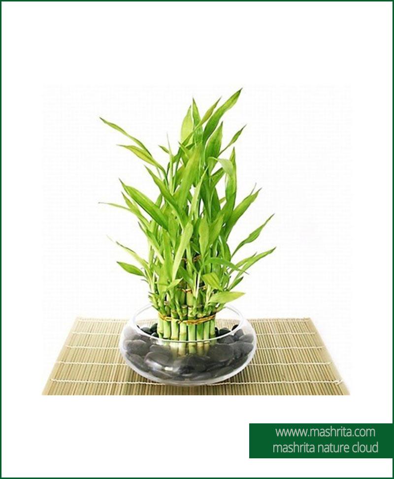 Plant Rentals Gaziabad