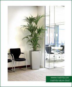 Plant Rentals Gurgaon