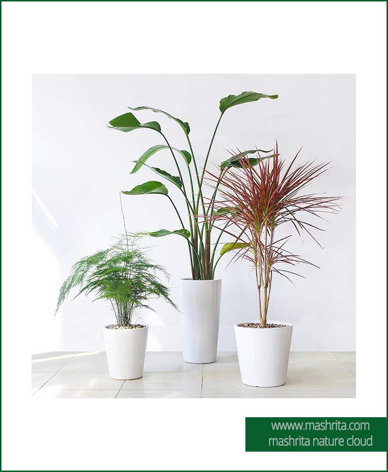 Plant Rentals for Hospitals