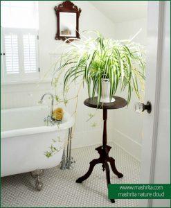 Bathroom Plants Rental