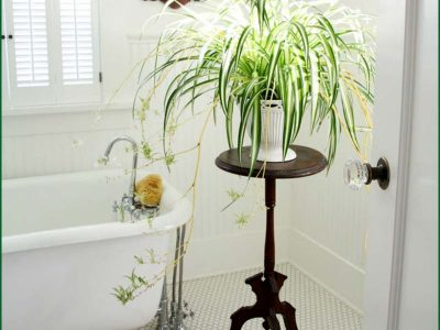 Bathroom Plants Rental