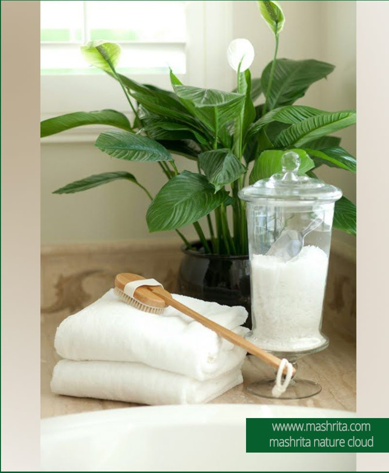Bathroom Plants Rentals