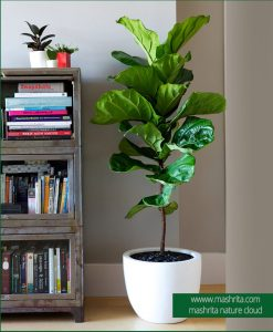 Plant Rentals Live up corner with Feedel Plant