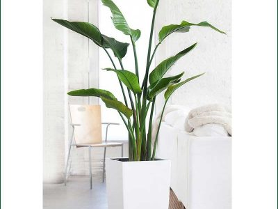Plant Rentals Stand free Plants