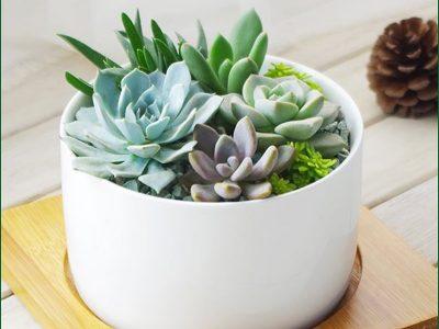 Succulents Plant Rentals