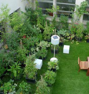 Roof Garden Services Gurgaon