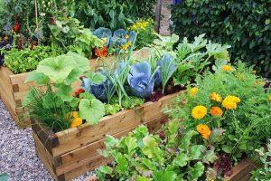 Roof Vegetables Garden