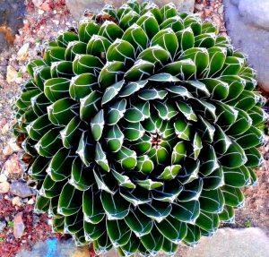 Sell Rare Plants India