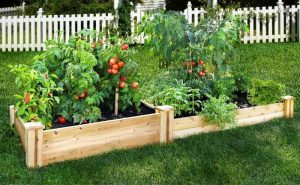 how we do vegetable gardening