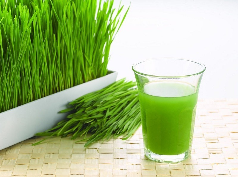 Organic Fresh Wheatgrass Gurgaon