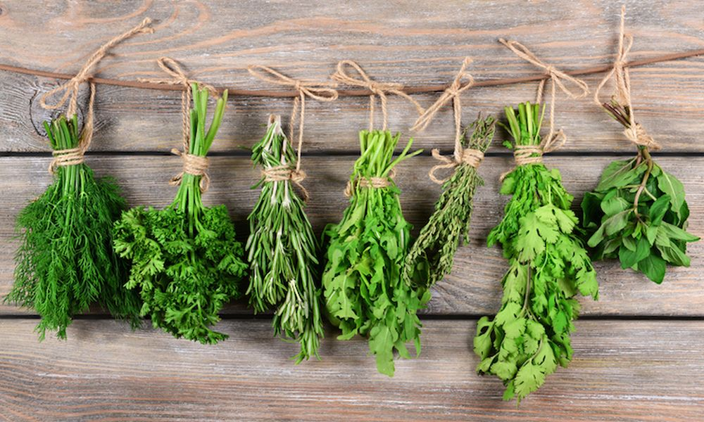 10 Best Winter Herbs for Delhi NCR and Tropical India