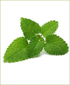 Lemon Balm_Mashrita_Nature_Cloud_0