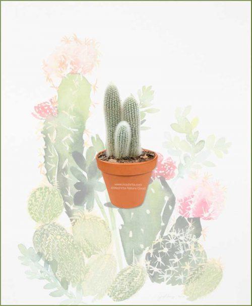 Cleistocactus-Strausii-Online-Plant-Nursery