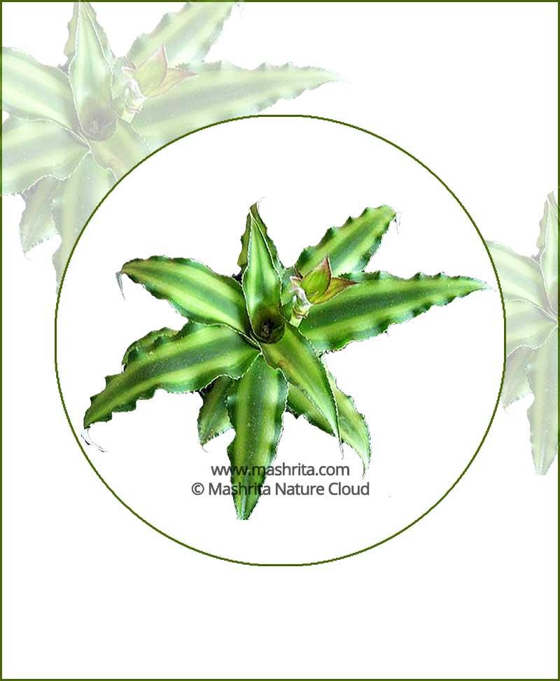Shop Online Plants In Raipur