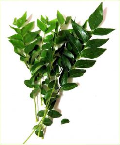 Curry Leaves_Mashrita_Nature_Cloud