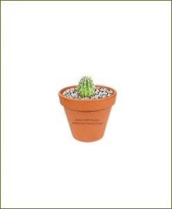 Echinocactus-Grusonii-Long-Schlumbergeras-(Zygocactus-Truncata)-Online-Plant-Nursery