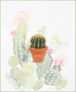 Echinocactus-Grusonii-Schlumbergeras-(Zygocactus-Truncata)-Online-Plant-Nursery