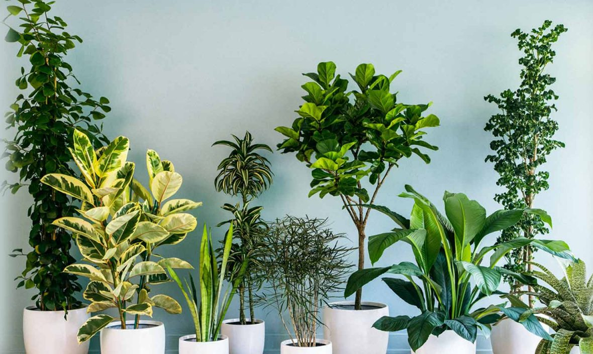How to care indoor plants?