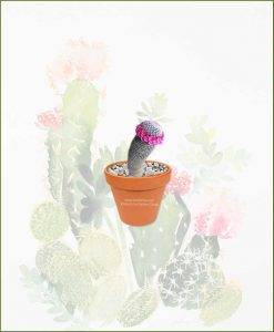 Mammillaria-Bella-Online-Plant-Nursery