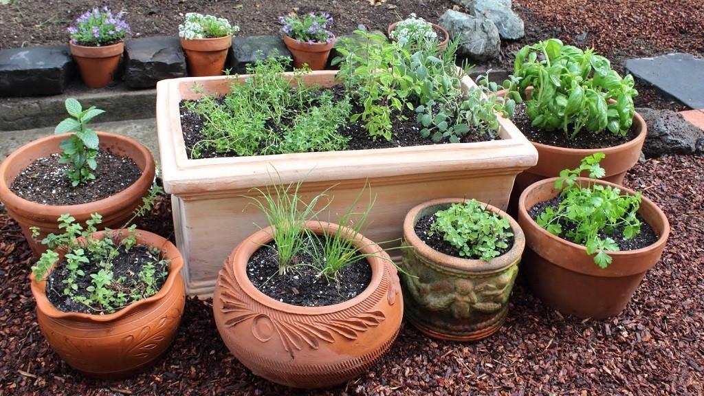 Medicinal Plants for Garden