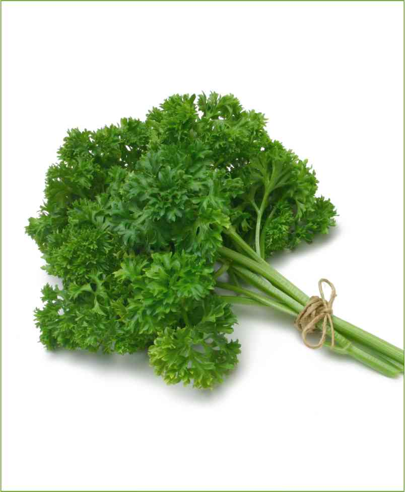 Parsley Potted Plants (Petroselinum Crispum)