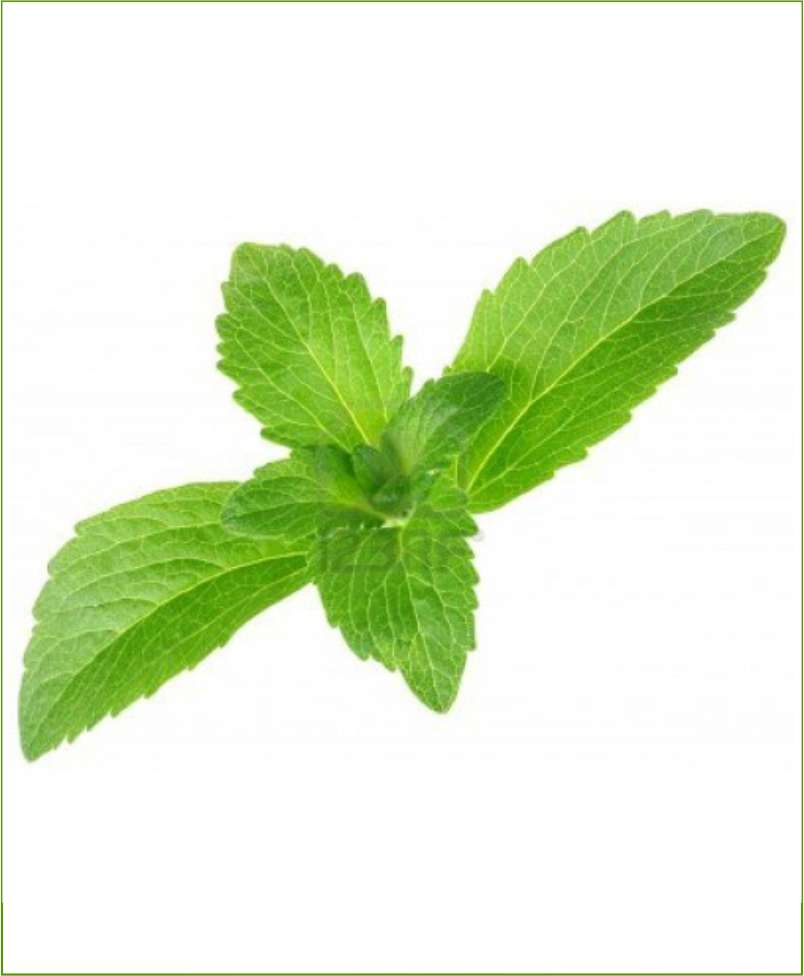 Stevia_Mashrita_Nature_Cloud
