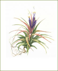 Airplants_Mashrita_Nature_Cloud