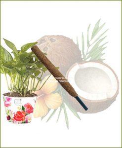 Buy Coir Pole 2 feet (2 feet Moss Stick)
