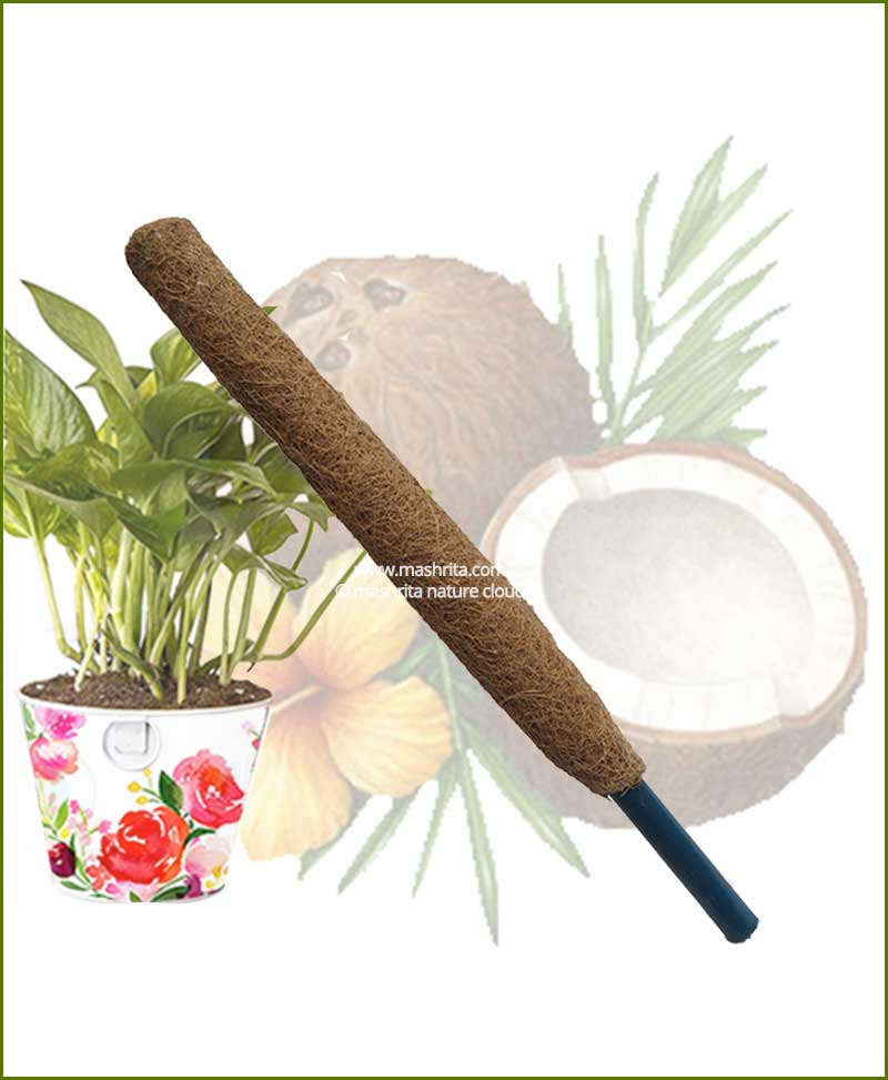Buy Coir Pole 4 feet (4 feet Moss Stick)
