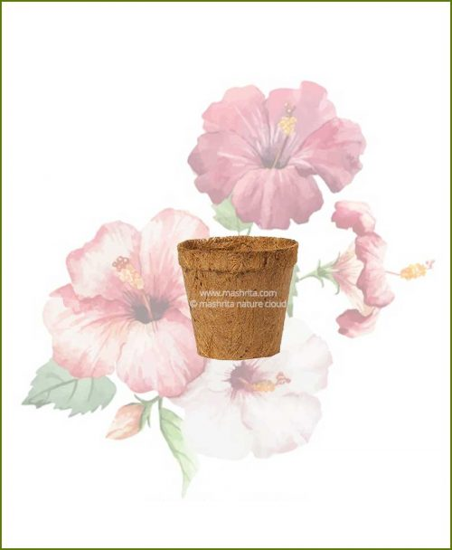 Buy Coir Pot 4 inch