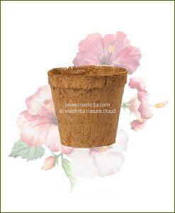 Buy Coir Pot 6 inch