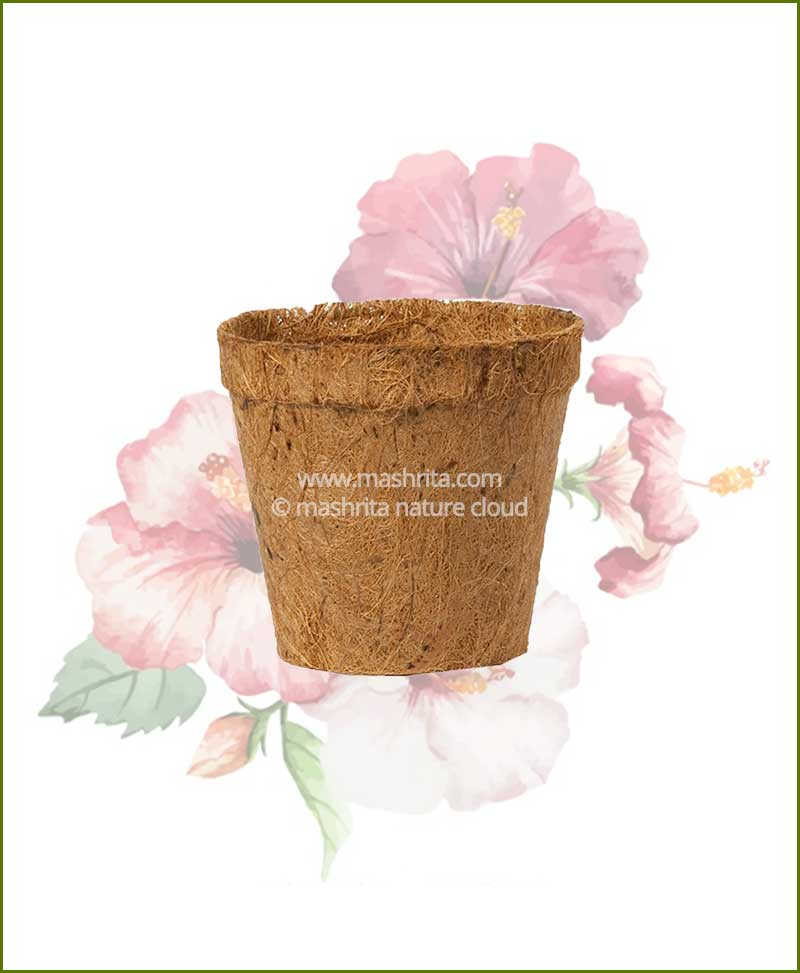 Buy Coir Pot 6 inch