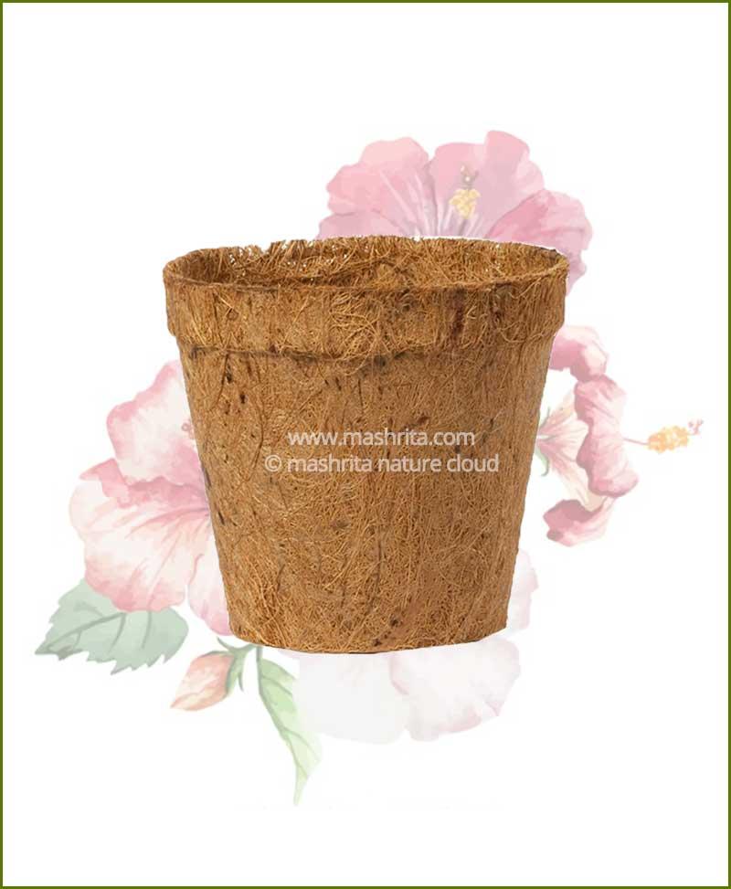 Buy Coir Pot 8 inch