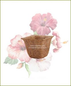 Buy Coir Spanish Cup Pot 4 inch