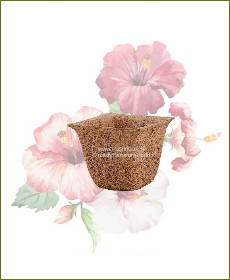 Buy Coir Spanish Cup Pot 4 inch