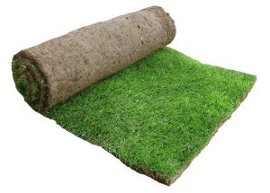 Carpet Grass Gurgaon - Lawn Grass Gurgaon - Artificial Grass Gurgaon