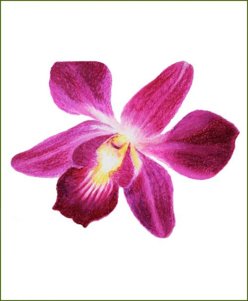 Orchid Flower Plants