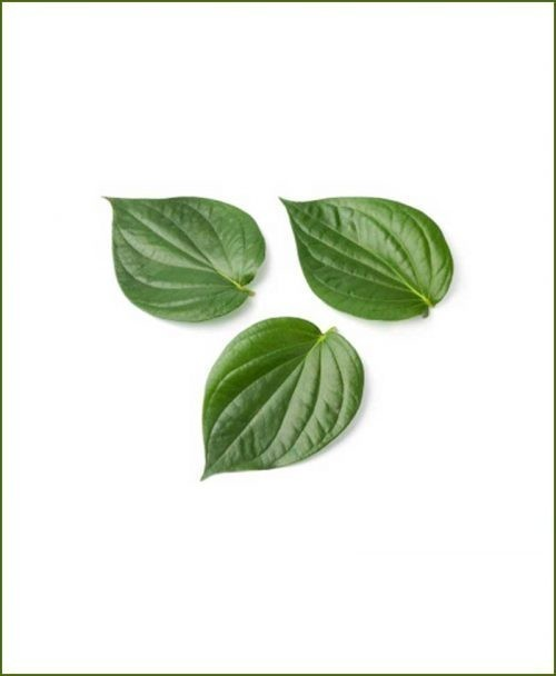Paan-Betel-Leaf_Mashrita_Nature_Cloud
