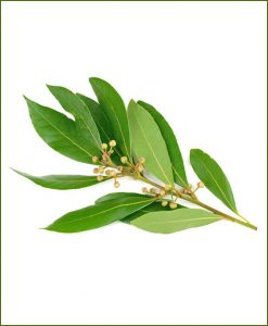 Tejapatta Bay Leaf (Cinnamomum Tamala)