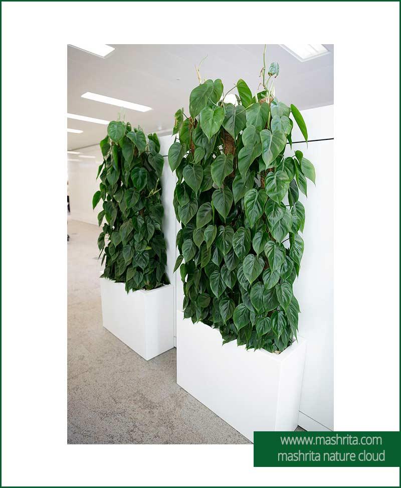 Plant Rentals Delhi NCR