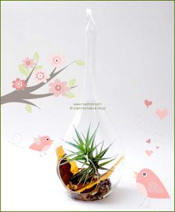 Bird Feeder Hanging Terrarium 24cm