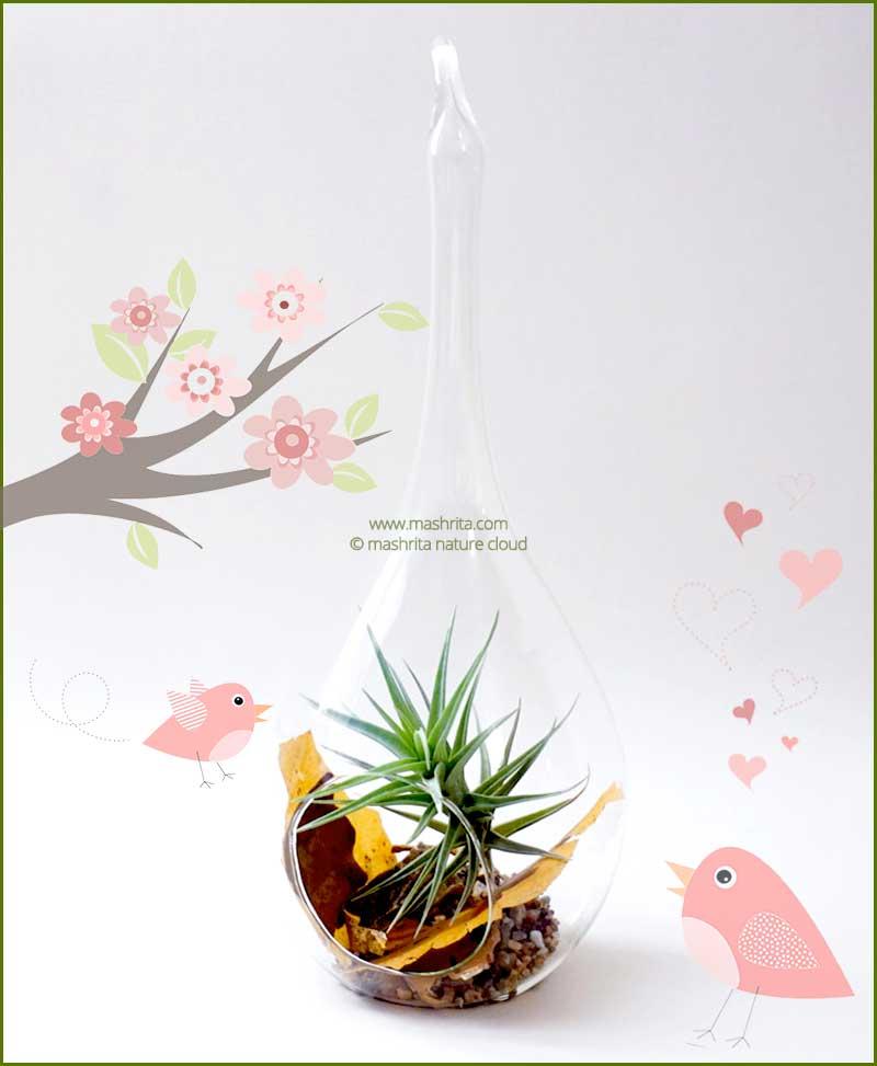 Bird Feeder Hanging Terrarium 24cm