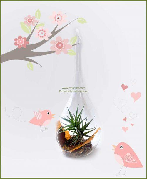 Bird Feeder Hanging Terrarium 18cm