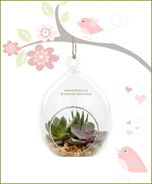 Hanging Terrarium Bird Nest (Oval)Shape16 cm