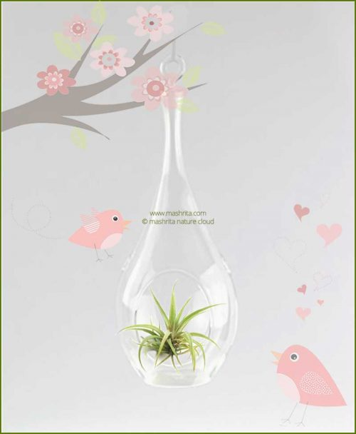 Tear Drop Hanging Terrarium 20cm