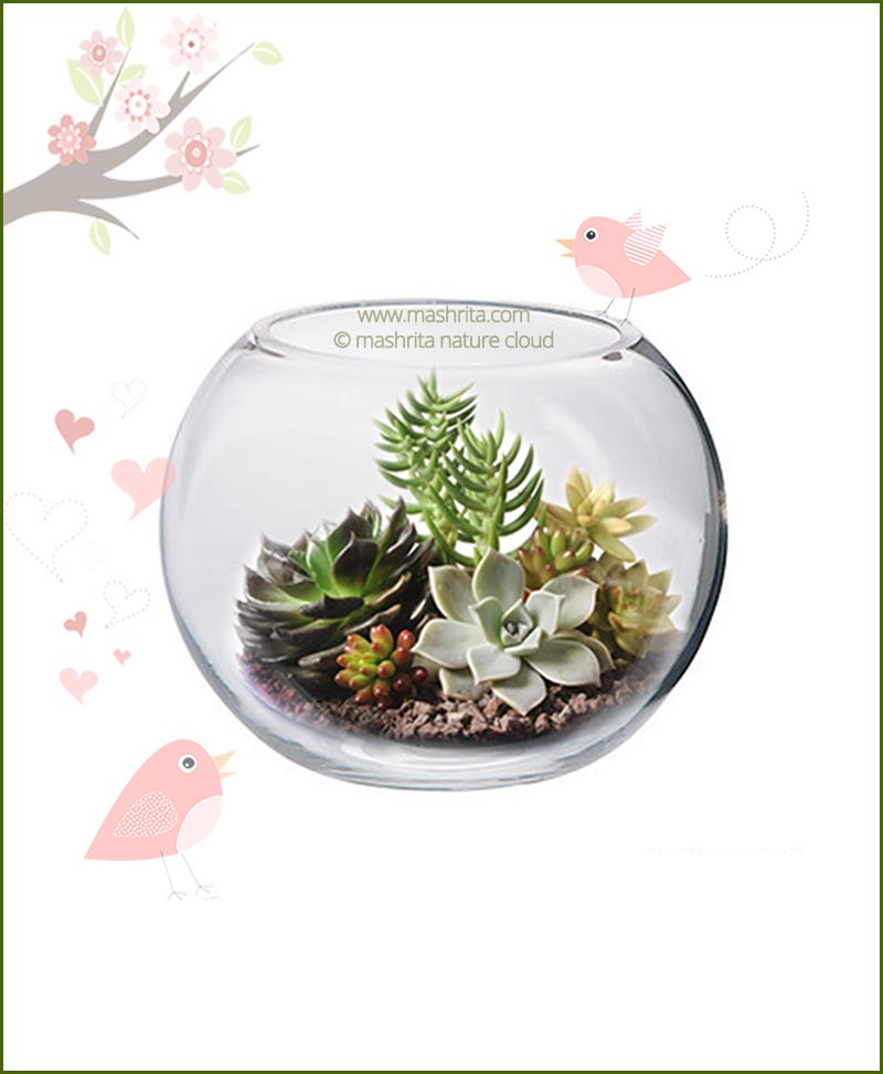 terrarium bowl round 20cm. Black Bedroom Furniture Sets. Home Design Ideas