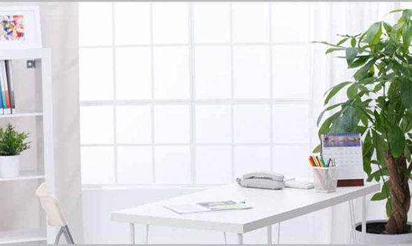 10 Best air purifier plants for office