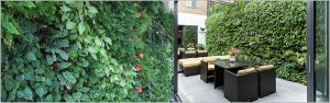 Best Outdoor Vertical Garden Plants for Delhi NCR