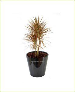 Ceramic-Glazed-Planter-Black-(10-Inch)