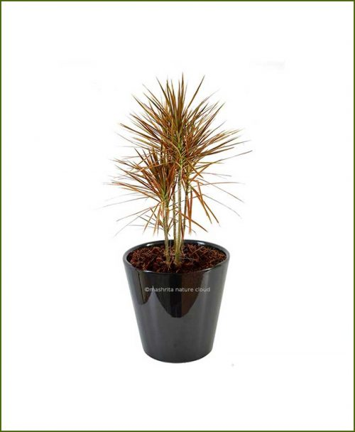 Ceramic-Glazed-Planter-Black-(10-Inch)